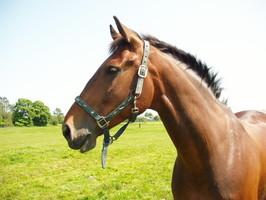 reiten, Pferd, Wiese